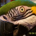 parrotwoman