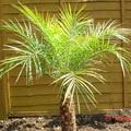 palmlover