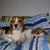 beagle_mum5
