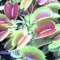 flyplantsman