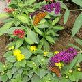 iluvflowers