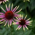 Garden_Shows
