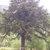 lyncgar