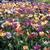 flowergirly