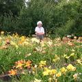 polliesdaylilies