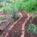 shrubby