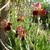 cornflowerblue