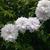 sharons_gardening