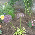 grans_garden