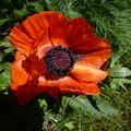 poppylinda