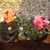 gardenerzinminn