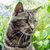 fractal_cat