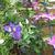 violetfairfield207