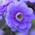 french_gardener