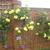 gardenowl