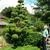 Poaannua