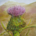 Lashbrook_margaux_scottish_thistle