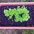 craigsplants