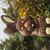 bingy_bunny
