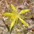 weeds11