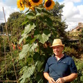 Allotment_david_with_sunflower_11th_august_2010_001