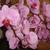 orchidbloom